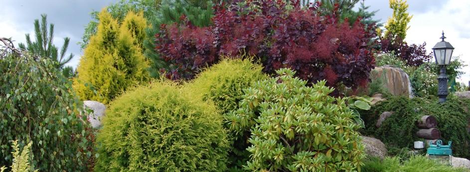 Trawniki, zieleń i nasady roślin